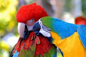 Macaws-300