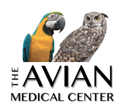 Avian medical center logo
