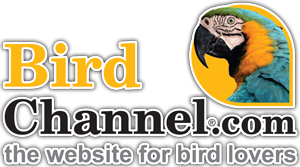 Bird Channel Logo