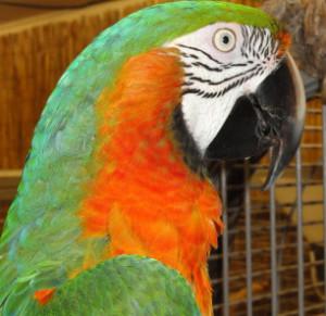Adopt a Parrot Application