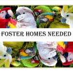 foster homes Needed Dual Collage