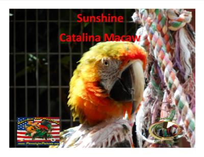 Sunshine Catalina Macaw