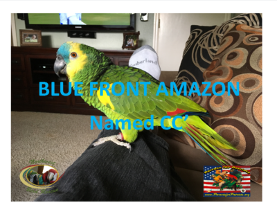 BLUE FRONT AMAZON  CC 8 12 16