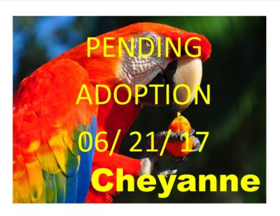 Cheyanne Scarlet Macaw PENDING ADOPTION