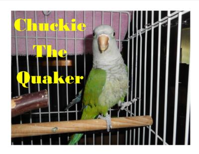 Chuckie Quaker 5 02 17