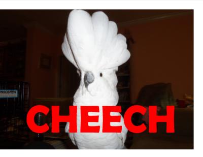 CHEECH UMBRELLA C TOO 7 25 17